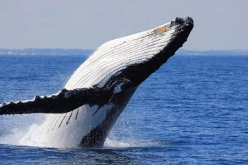 whale-watching-tours-cabo