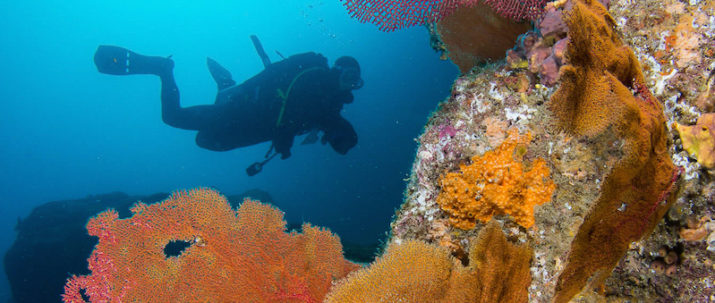 cabo-pulmo-diving