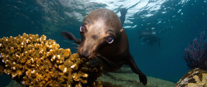 cabo-san-lucas-diving
