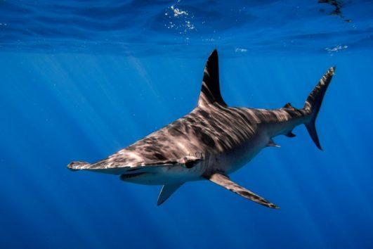 shark-diving-cabo-san-lucas