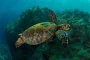 cabo-pulmo-snorkeling-tour