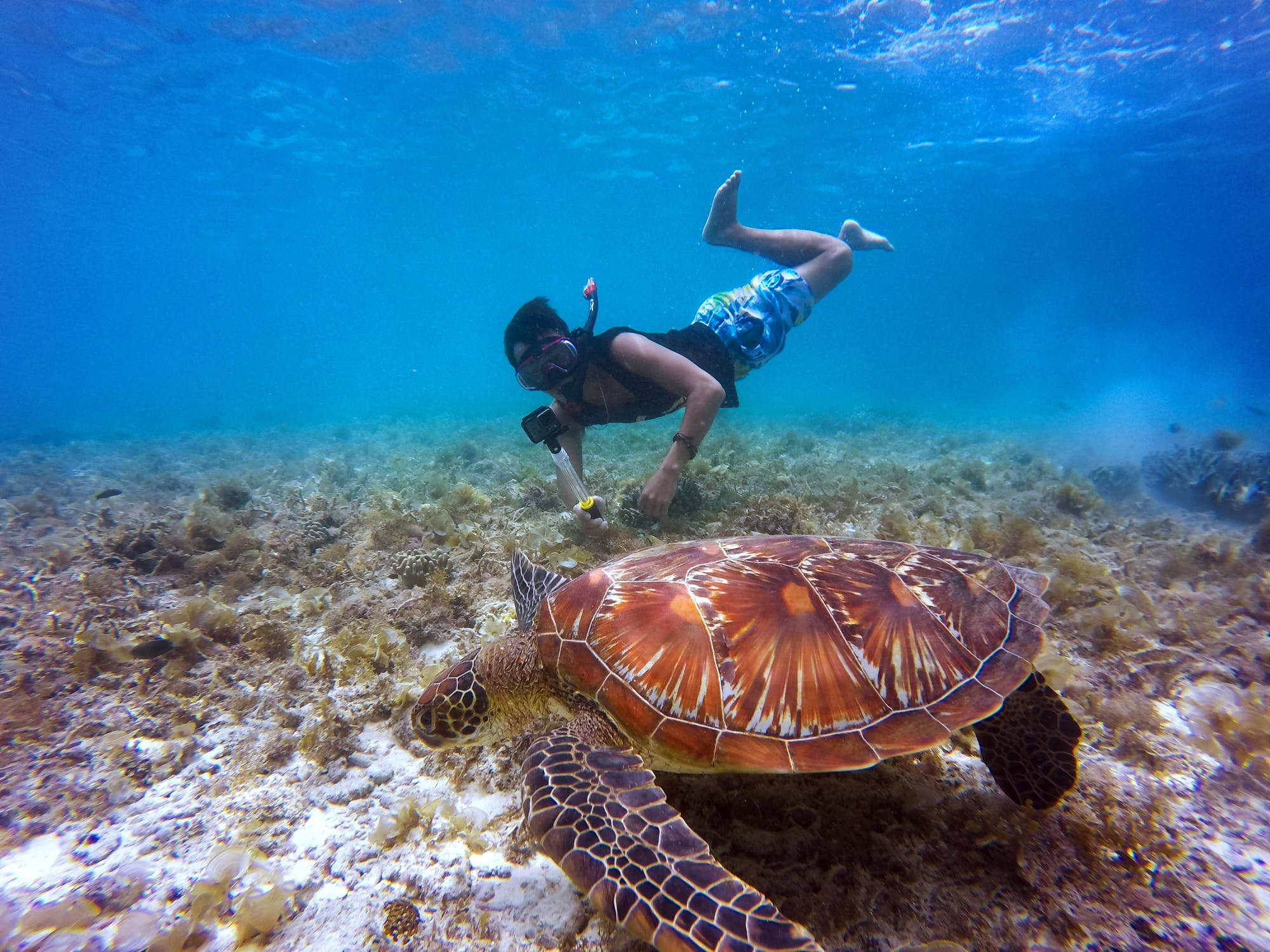 Snorkeling wild adventure at Espiritu Santo Island National Park (Day Tour)