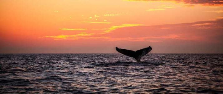 Whale Watching Sunset 'Concert' Tour