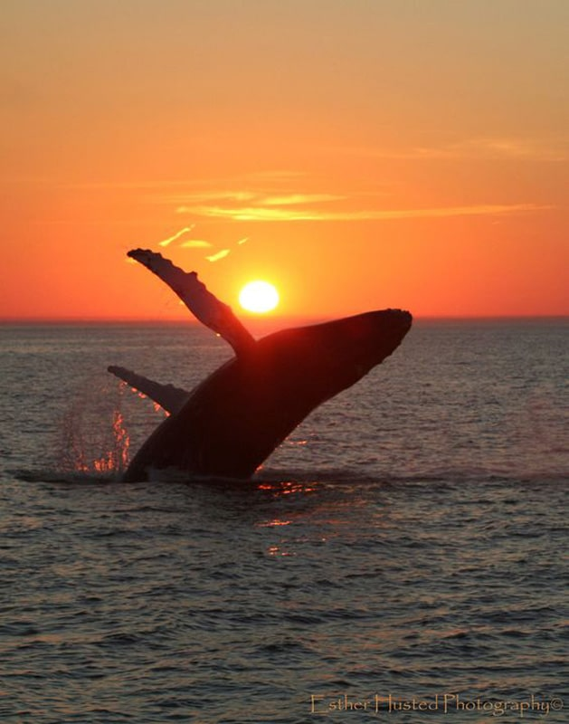 sunset-whale-tours-cabo