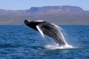 whale-watching-tour-cabo-san-lucas