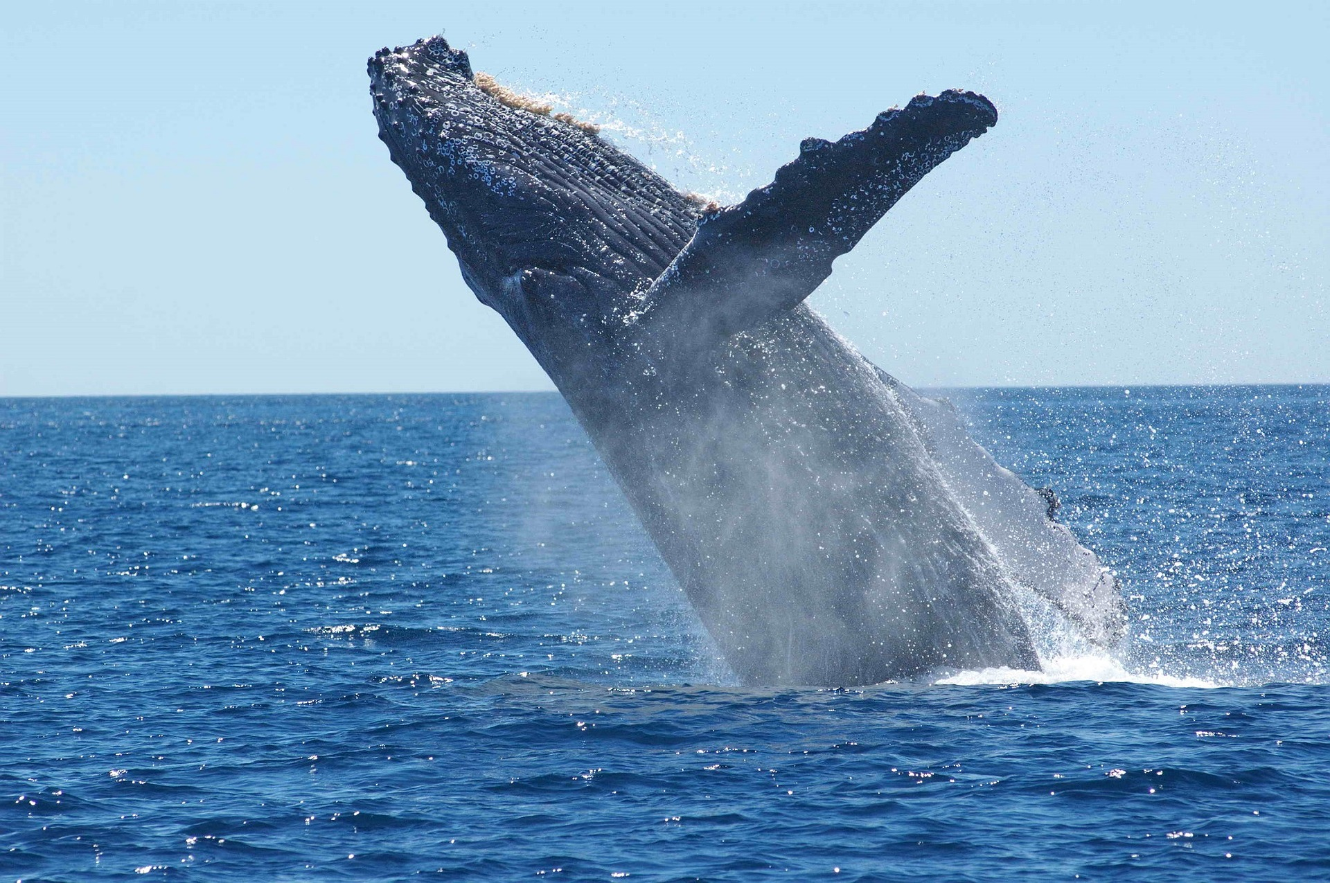 Whale Watching Day Tour
