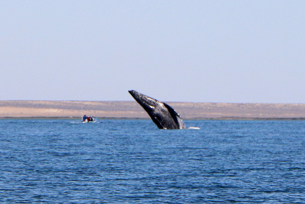 The Beasts of Baja | Whale Watching | Day Trip