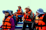 whale-watching-tour-cabo